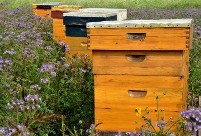 Peut-on déplacer une ruche ?